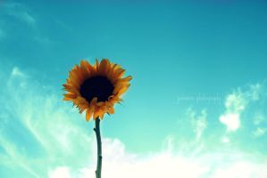 reach for the sky by jenmarie123