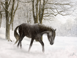 Snow Horse by ElreniaGreenleaf