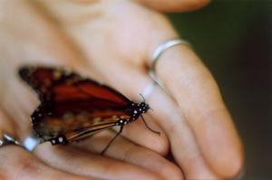 Wounded Butterfly by PHREAKuencies
