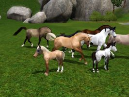 Big Headed Foals? Glitch Help!? by RivenWoodStables