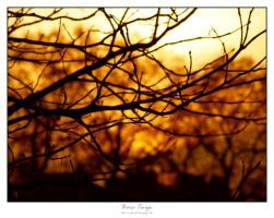 Bare Twigs by re-director