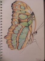 Malachite Butterfly by OrhideArt