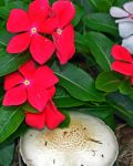 cool flower pic by cbarkasi