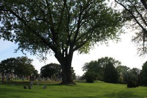 Big Tree Old Cemetery by wiltedwalflower