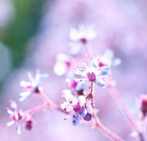 Summer bloom by pqphotography