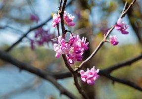 Blossom by the Lake by jimmytc25