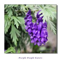 Purple People Eaters by dove-51