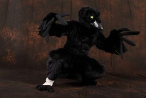 Corby: Confuzzled Photoshoot 2 by CuriousCreatures