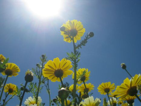 Reaching for the Sun by KCBL