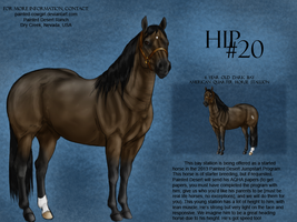 Jumpstart Program Hip 20 by painted-cowgirl