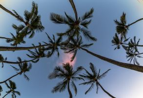 Beyond the Fronds by jbrum