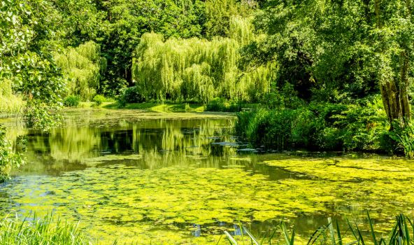 Summer Greens by bongaloid