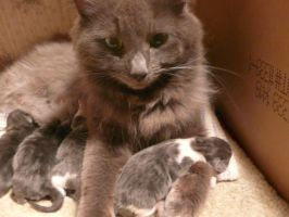 Mommy with Kittens by Unseelie-Stock