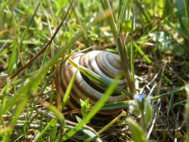 snail's sitting int he grass by andi40