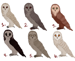 Freebie Barn Owl Adopts CLOSED by Pale-Sting