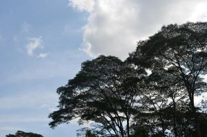 Cliche Trees and Sky by tangeloskye