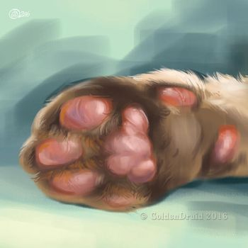 Toe Beans - SpeedPaint by GoldenDruid