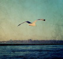 Istanbul is under my wings.. by bstwi