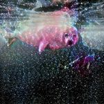 Request 3 - For Jacob. A Seal Among the stars. by MatthewandKatlayn