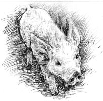 Pencil_pig_3 by Anika-Gris