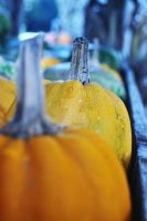 Pumpkins by ashleysmithphoto