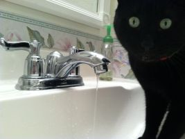 The Sink Panther by RedDragonfly