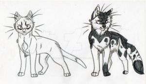 Warrior Cats Designs by KasaraWolf