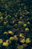 Old Apples by Kuallo