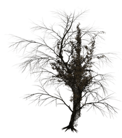 Dark Trees PNG Stock 02 by Jumpfer-Stock