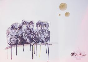 Three wise owls? by muddly661