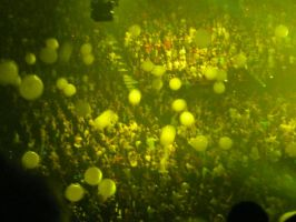 Coldplay Yellow 2 by Lafire