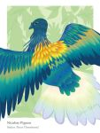 EA Project 4: Nicobar Pigeon by meihua