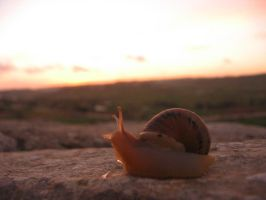 Snail by Thethestral
