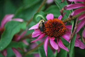bee 2 by meihua-stock