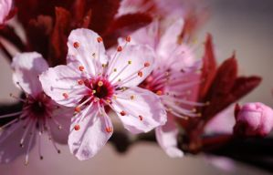 The Heart Of Spring by Nikki-vdp