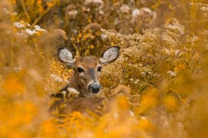 Deer Bouquet by bovey-photo
