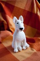 white bullterrier by znmystery