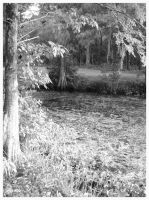 Black and White Swamp by sugabear