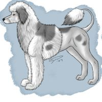 Furry Paws IB - Port Water Dog by tailfeather