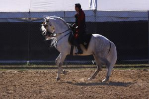 Cantering 16 by SoloPianoStock
