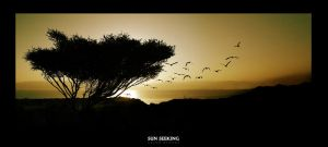 Sun Seeking by gilad
