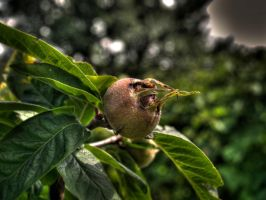 Just some fruit in HDR by MattHalic