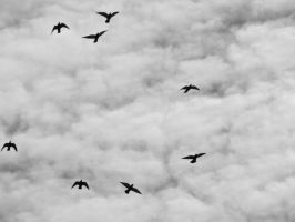 Birds in flight by Thepieholephotograph