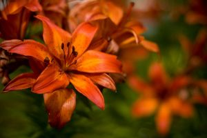 Stargazer stock by EK-StockPhotos