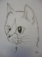 Warrior Cat!!! by TopazBeats