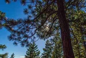 Sun in the Pines by rockmashane