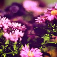 Flowers by NanaPHOTOGRAPHY