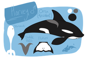 Harvey - Reference Sheet by FelineMyth
