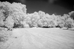 Infrared Landscape by Wallcrawler62