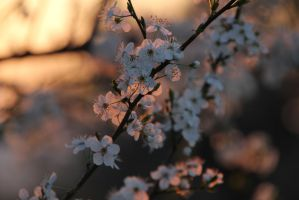 Spring Time by Adres89